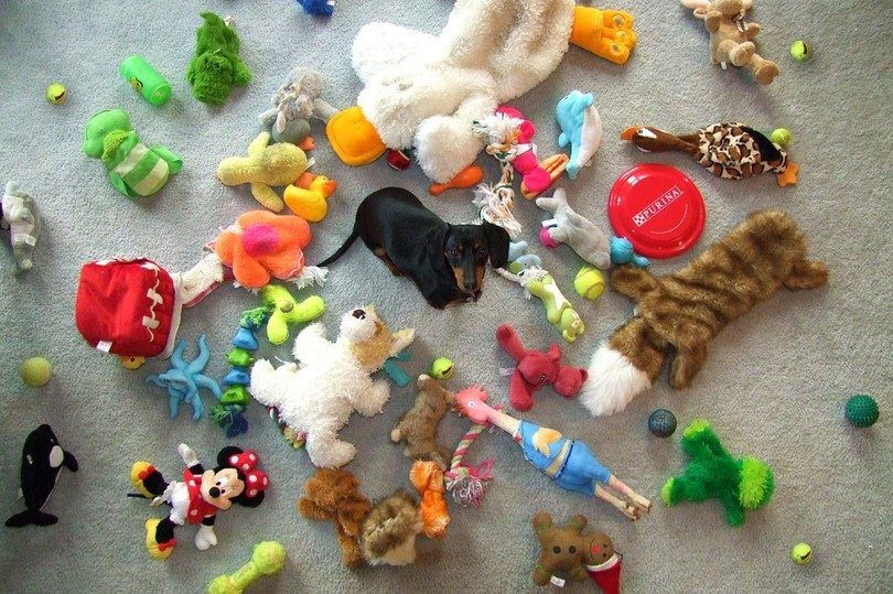 Dog toys to keep them busy: keeping your dog entertained when you're not around