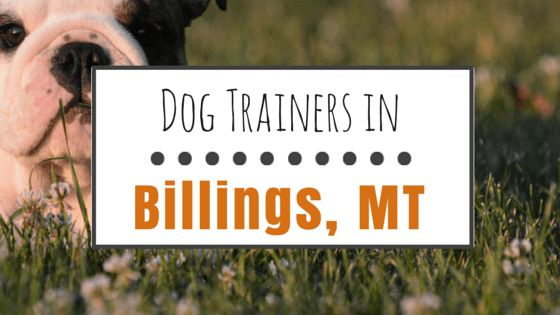 Dog training in billings, mt: 8 solid options