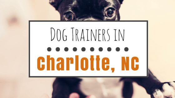 Dog training in charlotte, nc: 10 great options & maps to help you get there