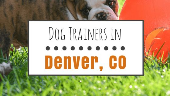 Dog training in denver: what are my options?
