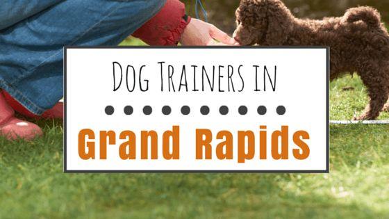 Dog training in grand rapids, mi: 9 positive training options