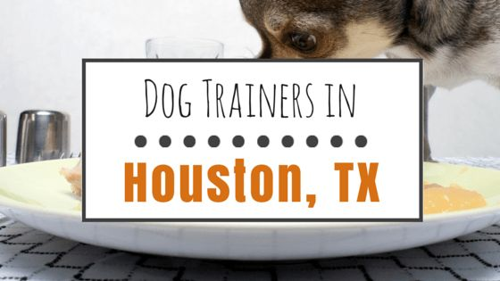 Dog training in houston: 8 great professionals
