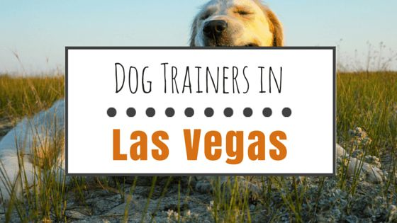 Dog training in las vegas: 7 of the best facilities