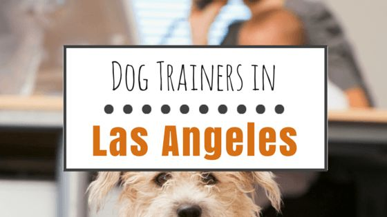Dog training in los angeles: top classes & instructors