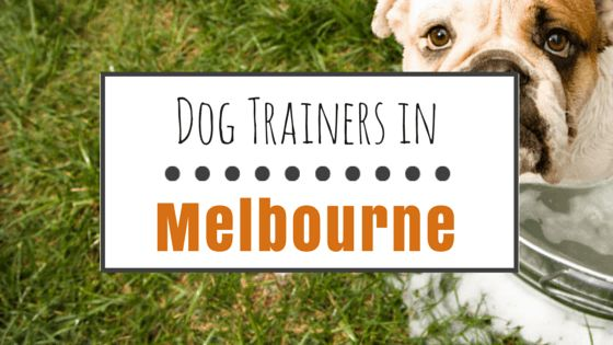 Dog training in melbourne, fl: top choices