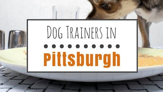 Dog training in pittsburgh: 10 good reward-based trainers