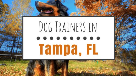Dog training in tampa: 9 great options