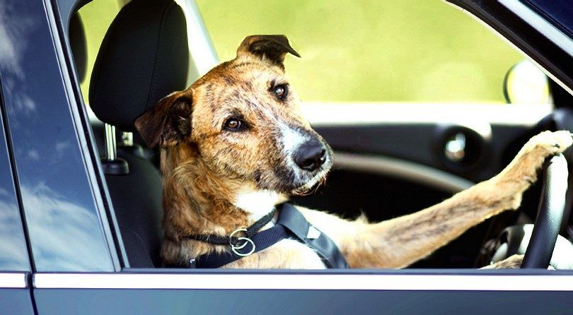 Dog travel tips and lifehacks: let`s go on vacation