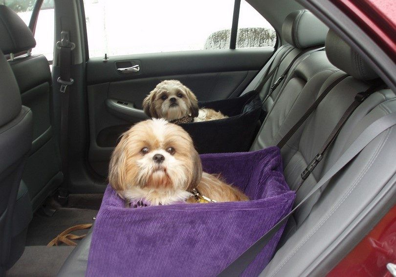 Dogs on long trip