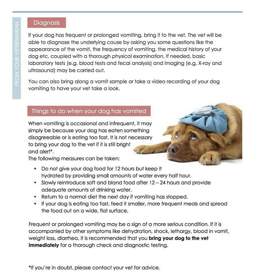 Vomiting in dogs infogrpahic two