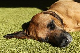 Always visit the veterinarian when the dog keeps vomiting, appears lethargic or has blood tinged vomit. These may be indicative of serious underlying conditions.