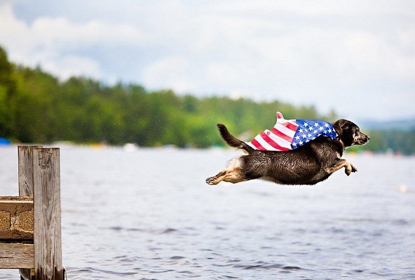 Dog flying in US