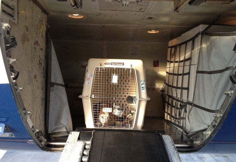 Dog in cargo of a plane