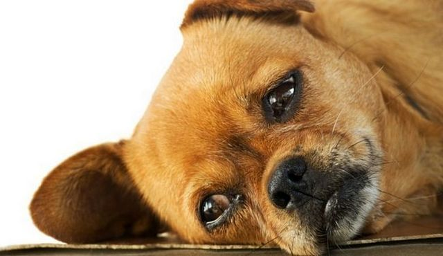 Down boy: is amitriptyline for dogs safe?