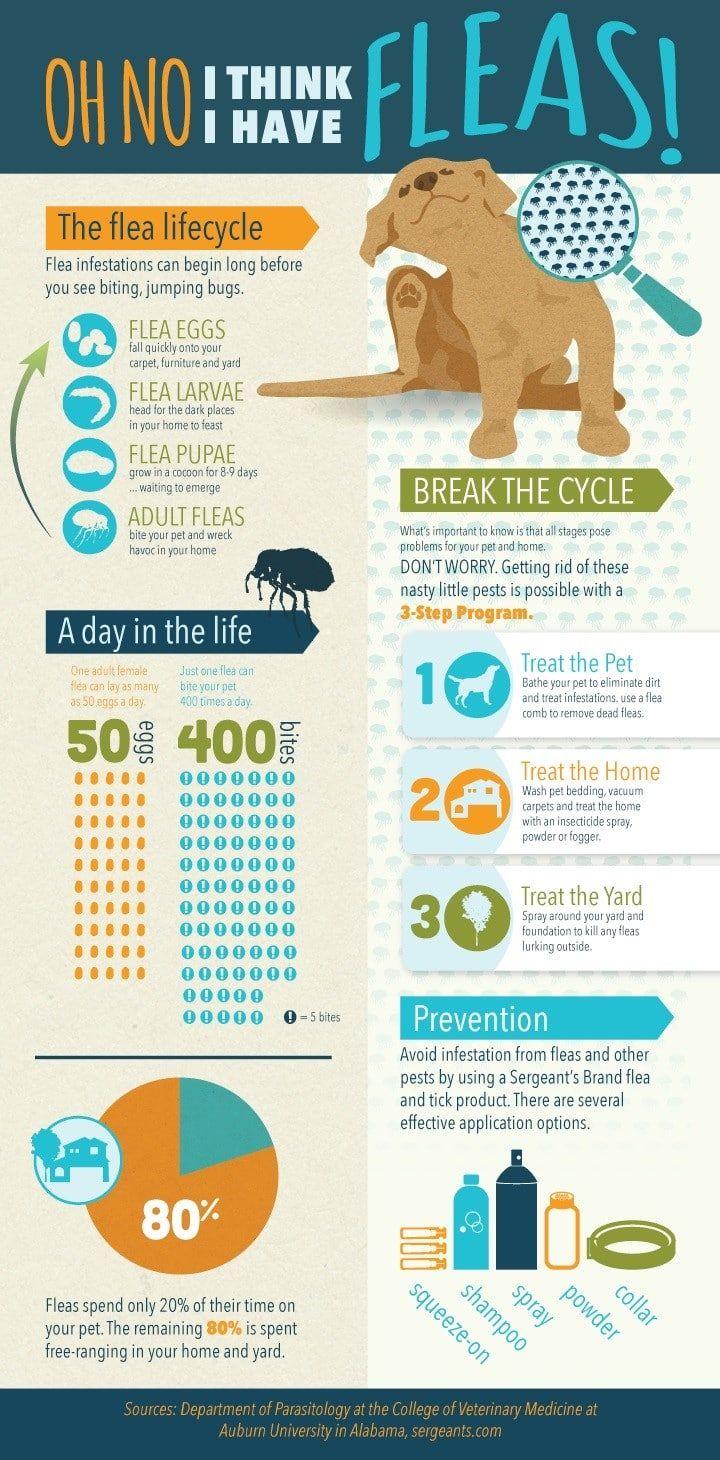 Fleas infographic