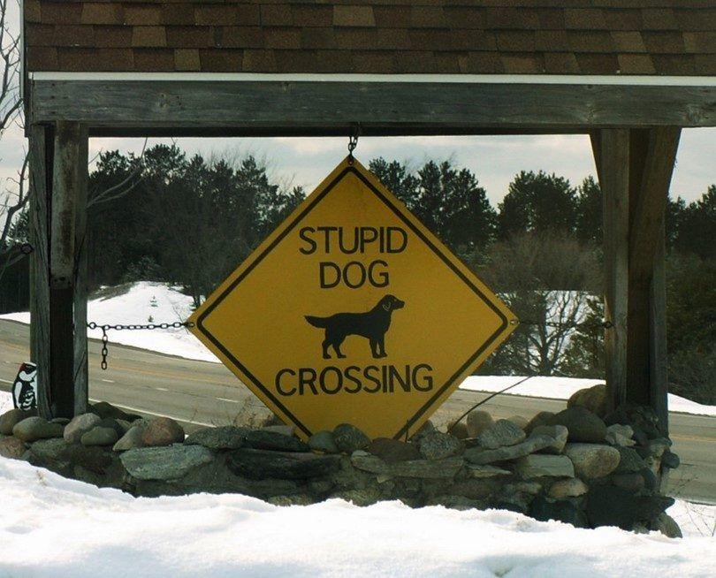 Stupid dog crossing sign