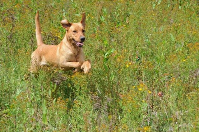 Earth-friendly ideas for dog owners