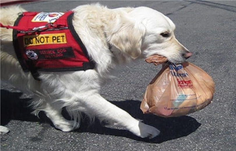 Service Dog helping
