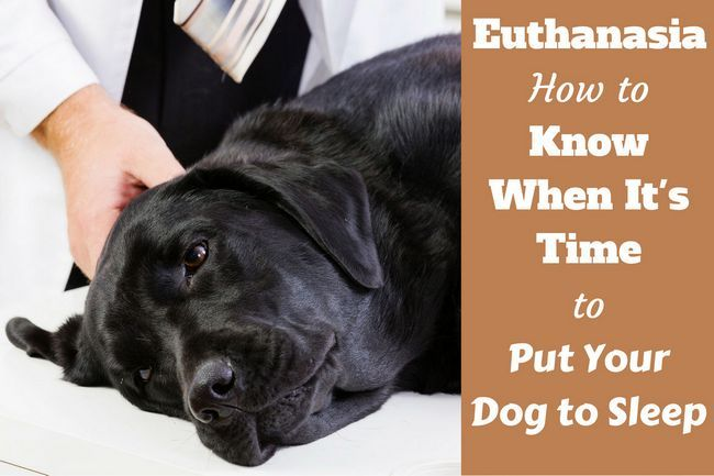 when to put your dog down written beside a peacefully sleeping labrador on a vet`s table