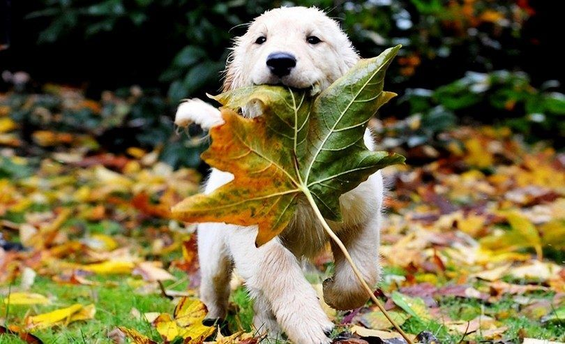 Puppy palying with a leaf