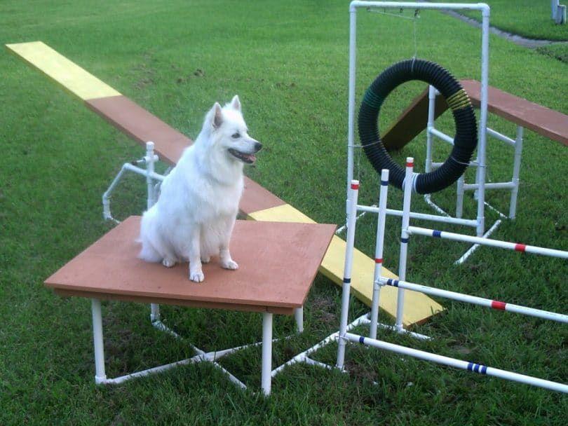 Dog Agility Equipment Construction