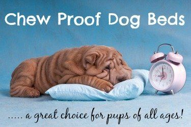 Find the perfect chewproof dog bed