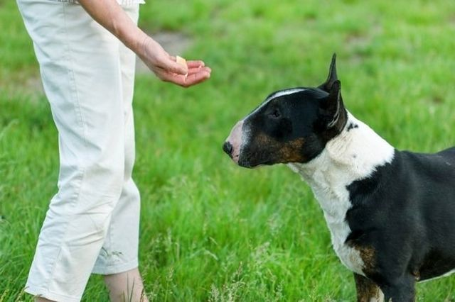 Five benefits of using treats for training