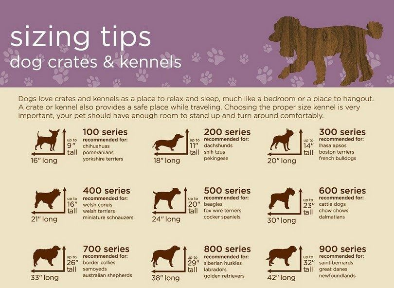 Dog crates and kennel sizing chart