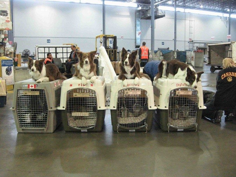 Dogs in cargo