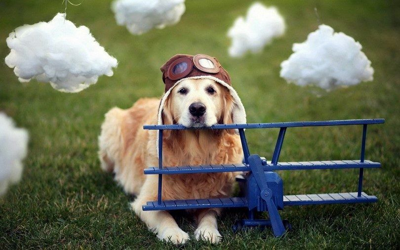 Flying with a dog: a travel guide for man's best friend