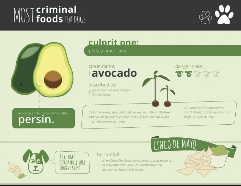 Avocado not for dogs