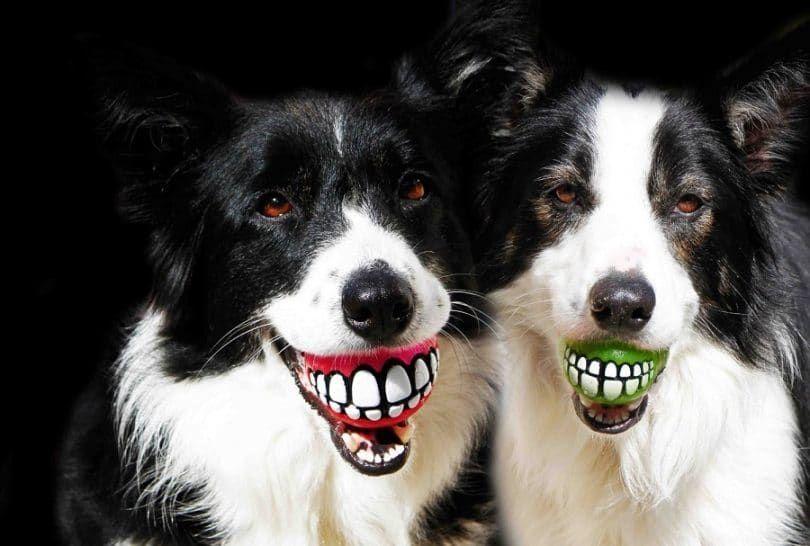 Rogz Grinz Dog Toy Ball to Hide Treats