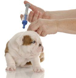 Giving puppy shots at home