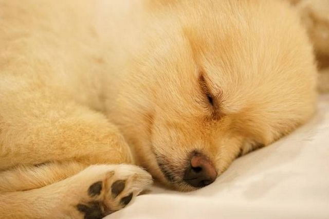 Good boy, good night: ways to help dogs sleep