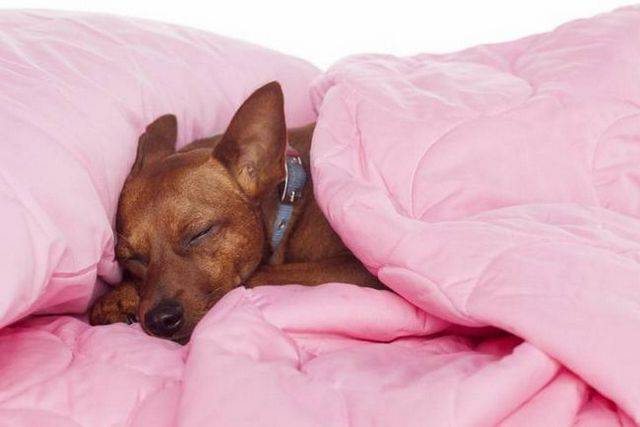 Good dogzzzzzz: how to get a puppy to sleep through the night
