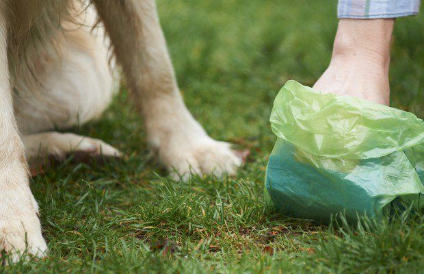 Government Says Dog Waste Bags Aren`t as Green as Advertised