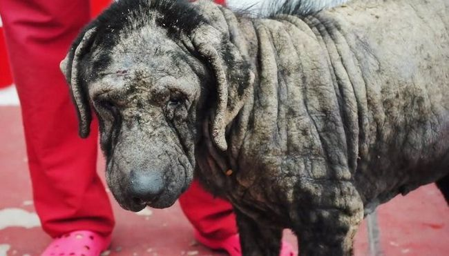 Grab the Tissues for This Dog Rescue Video