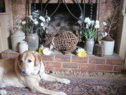puppy proofing your home: A yellow lab in front of a fire place filled with ornaments