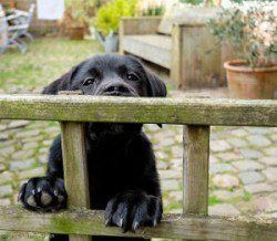 A puppy climbing a fence to illustrate puppy proofing your garden