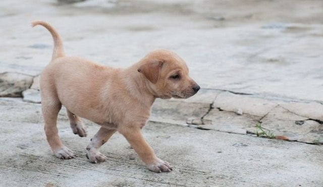 Handling a nightmare: steps to find your lost puppy