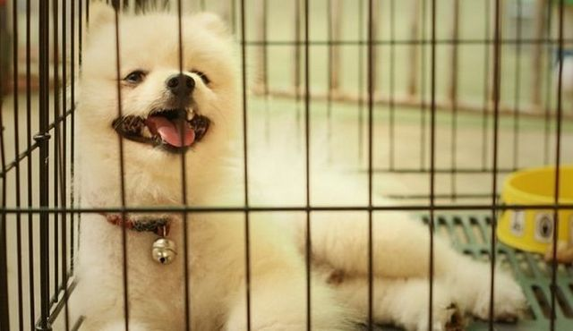 Help! My dog is crying in his crate! What should I do?