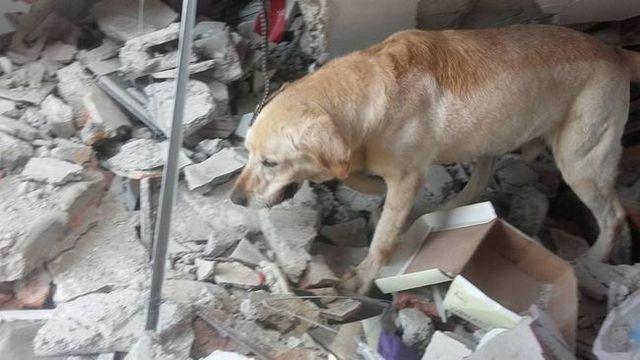 Dayko during rescue efforts in Ecuador. Source: Cuerpo De Bomberos Ibarra via Facebook