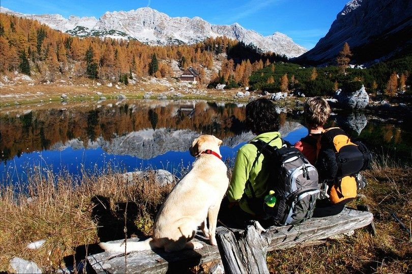 Dog hiking mountains lake