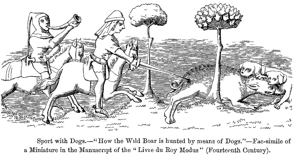 Hog hunting with dogs: what first timers need to know
