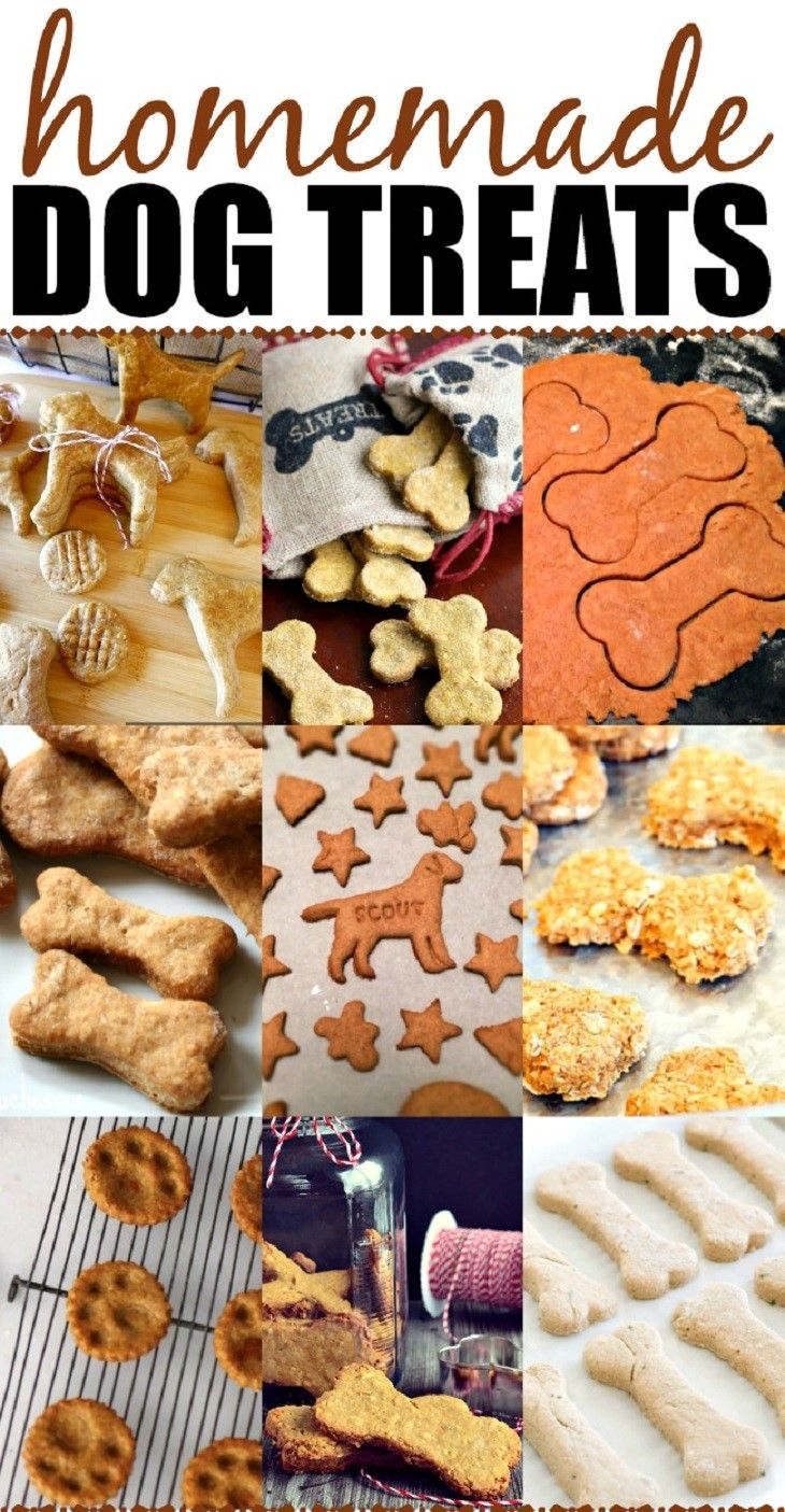 Making your own dog treats
