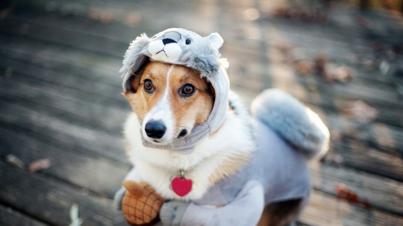 Homemade dog costumes: top 5 diy creative ideas for parties