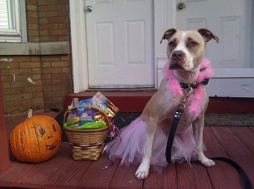Ballerina costume for dog