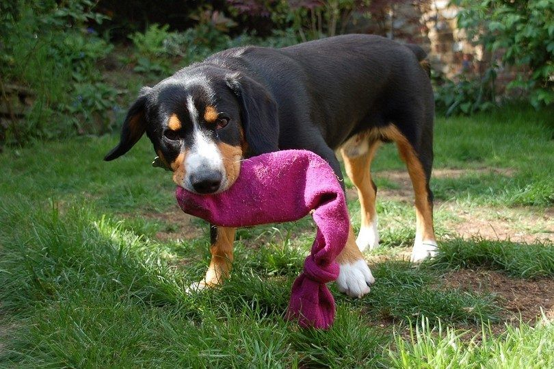 Homemade dog toys: a cost free and eco-friendly solution for your friend