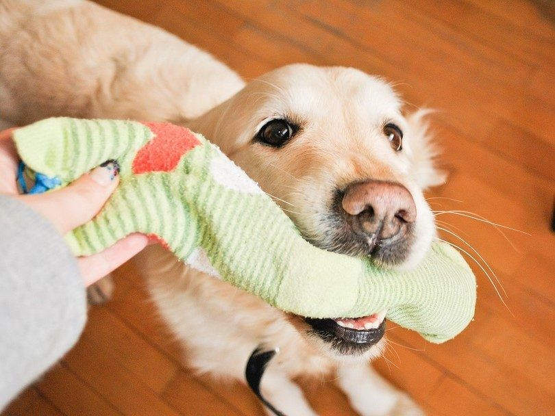 Make a toy for your dog out of socks