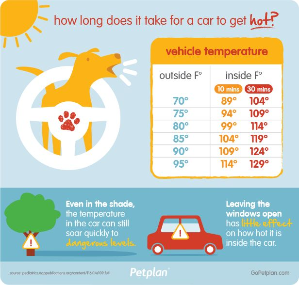 Hot cars are not cool! Help us save dogs lives